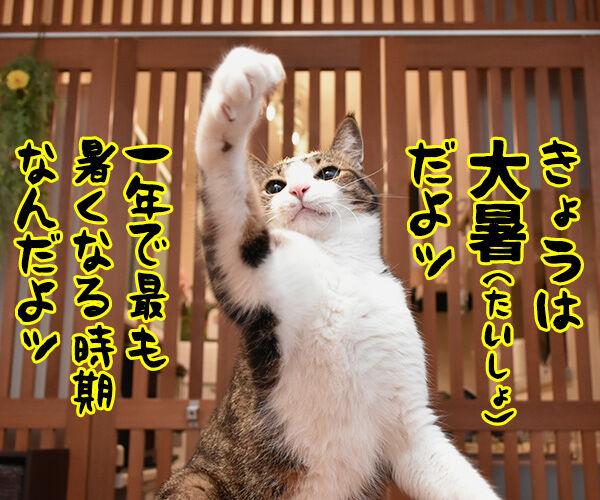 きょうは大暑(たいしょ)なんですってッ 猫の写真で4コマ漫画 1コマ目ッ
