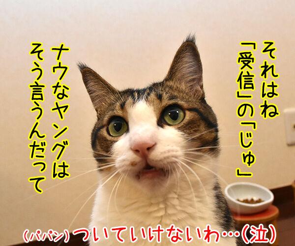 「はい」じゃなくて「りょ」じゃなくて 猫の写真で4コマ漫画 3コマ目ッ