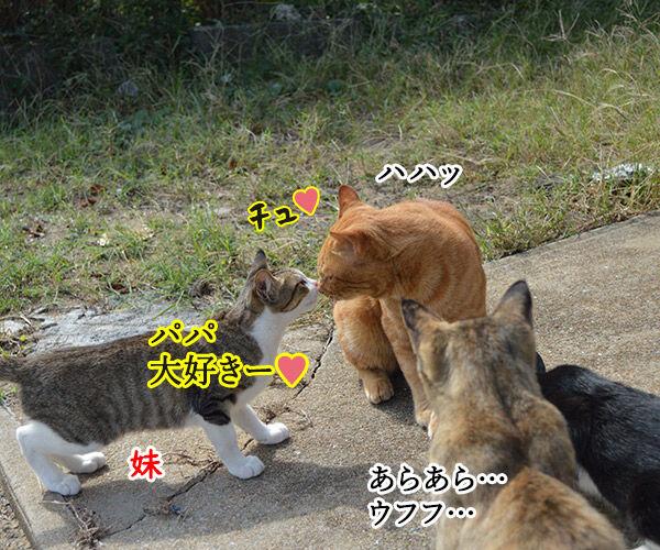 猫島 其の五 猫の写真で4コマ漫画 2コマ目ッ