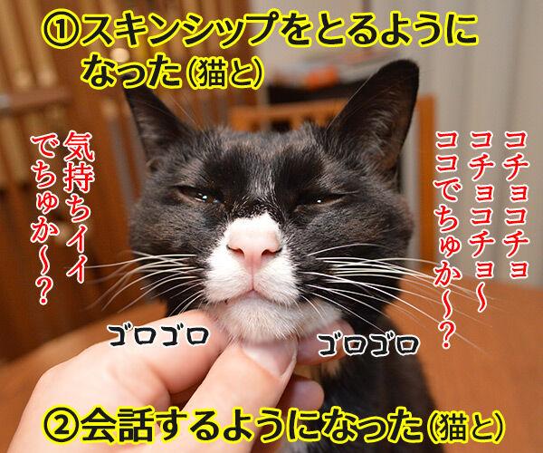 ペットを飼うのは夫婦円満の秘訣よね 猫の写真で4コマ漫画 2コマ目ッ