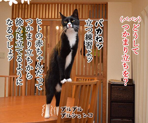 練習中なのよッ 猫の写真で4コマ漫画 2コマ目ッ