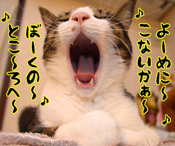 ある演歌歌手のはなし 猫の写真で4コマ漫画 1コマ目ッ