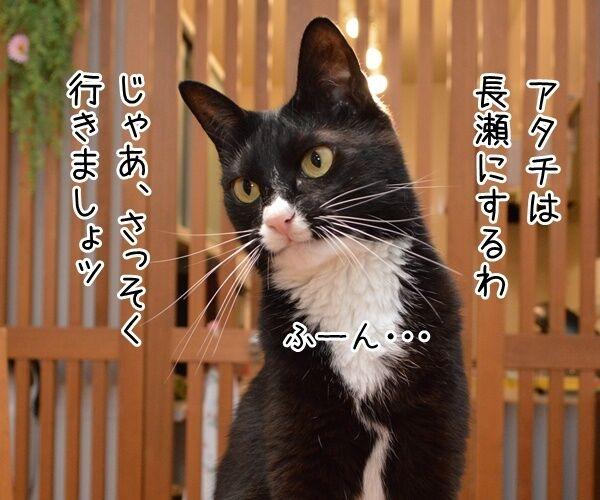 さあ、みんなで行きましょー♪ 猫の写真で4コマ漫画 2コマ目ッ