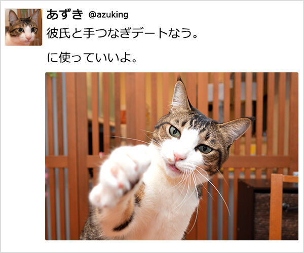 『~なう。に使っていいよ。』ってやってみたのッ 猫の写真で4コマ漫画 1コマ目ッ