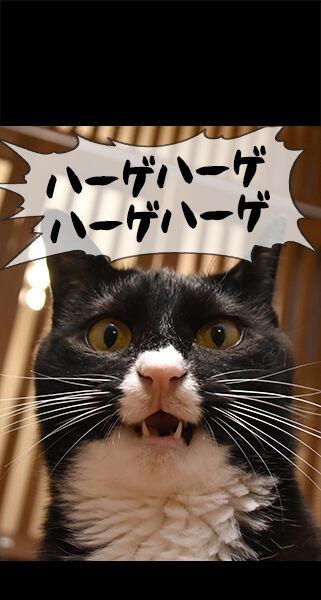 猫に叱られたい人のためのロック画面なのッ 猫の写真で4コマ漫画 ロック画面3