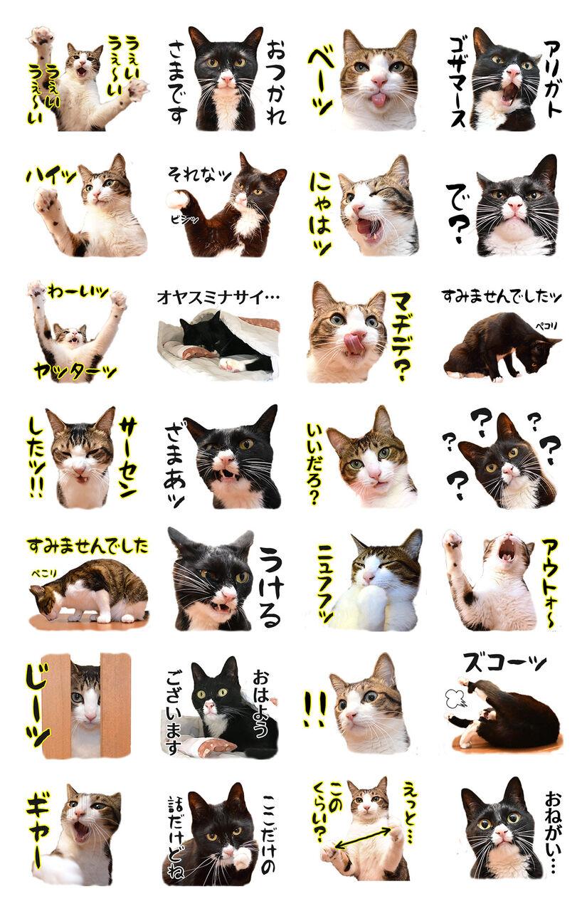 あずだいのLINEスタンプを作ってるのッ 猫の写真で4コマ漫画 5コマ目ッ
