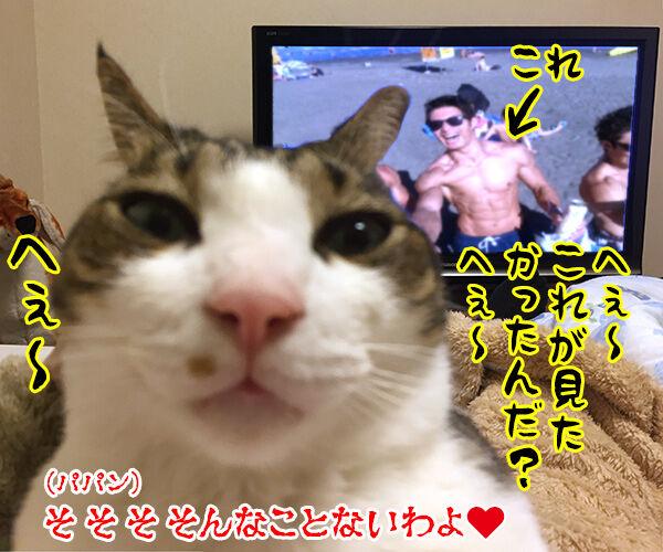 テレビが見えないから 猫の写真で4コマ漫画 4コマ目ッ