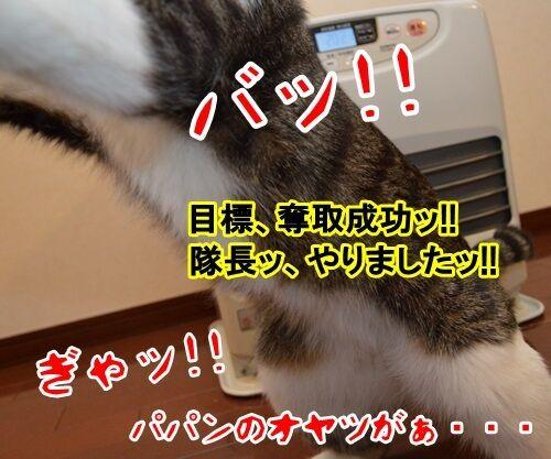 アタック 猫の写真で4コマ漫画 4コマ目ッ