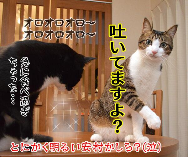 とにかく明るいあずき 猫の写真で4コマ漫画 4コマ目ッ