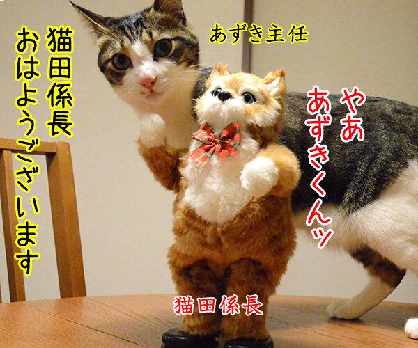 猫田係長 猫の写真で4コマ漫画 1コマ目ッ