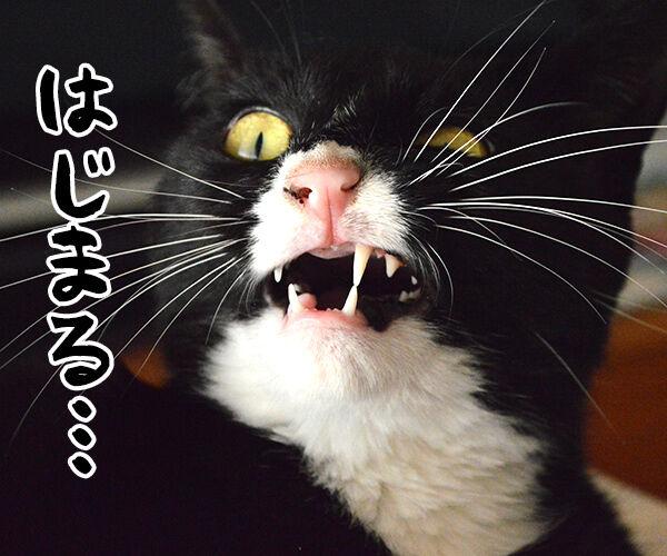 はじまりのシャウト 猫の写真で4コマ漫画 3コマ目ッ
