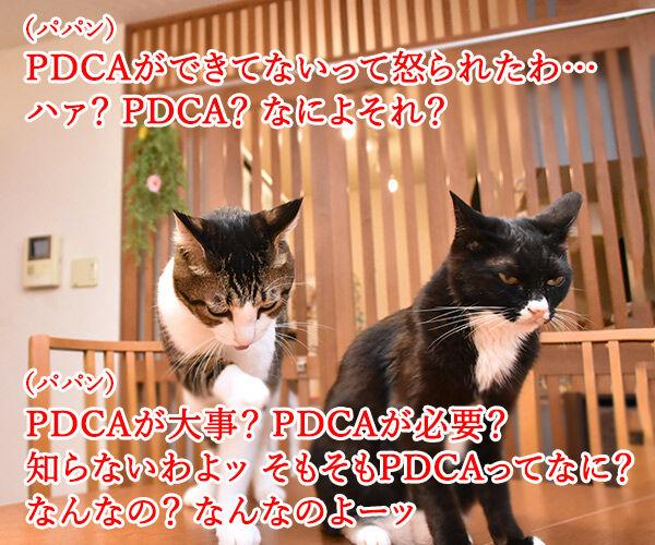PDCAができてないって怒られたの 猫の写真で4コマ漫画 1コマ目ッ
