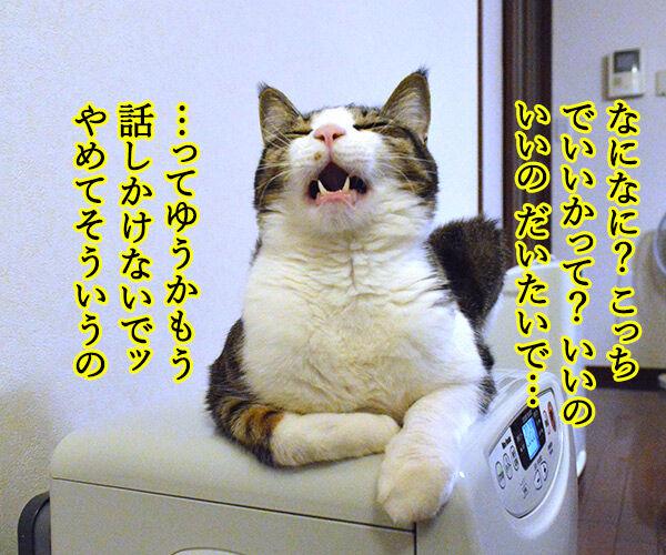 節分の日のエア〇〇 猫の写真で4コマ漫画 2コマ目ッ