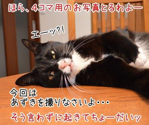 お写真撮りますッ 猫の写真で4コマ漫画 2コマ目ッ