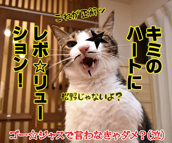 使っている寄生虫駆除剤ランキング 猫の写真で4コマ漫画 4コマ目ッ