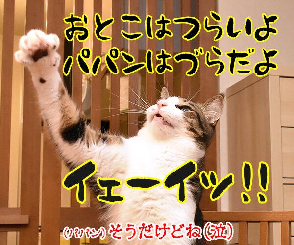 きょうは『男はつらいよ』の日なんですってッ 猫の写真で4コマ漫画 4コマ目ッ