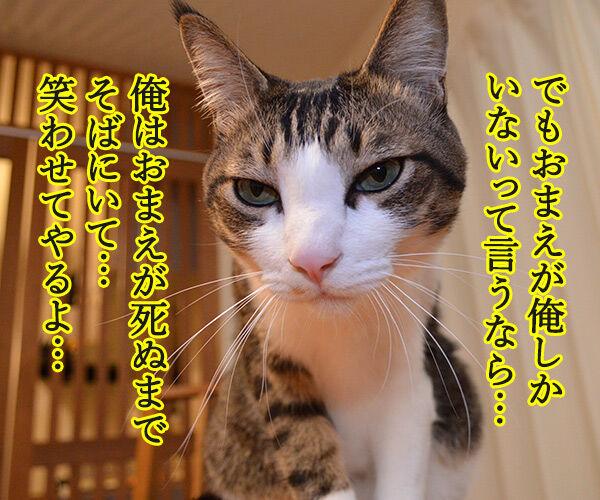 お前が俺しかいないって言うなら 猫の写真で4コマ漫画 2コマ目ッ