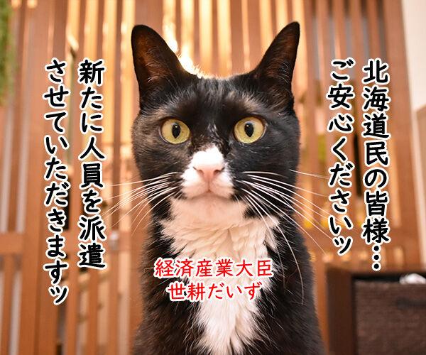 北海道胆振東部地震 心よりお見舞い申し上げます 猫の写真で4コマ漫画 3コマ目ッ