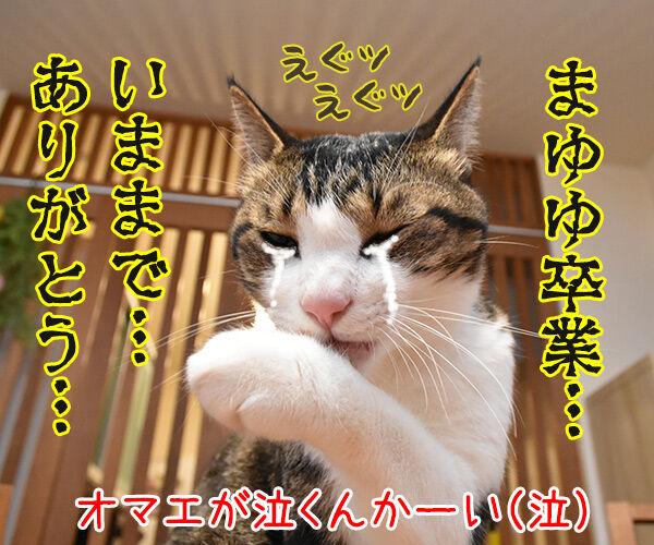 きょうは父の日だものッ 猫の写真で4コマ漫画 4コマ目ッ