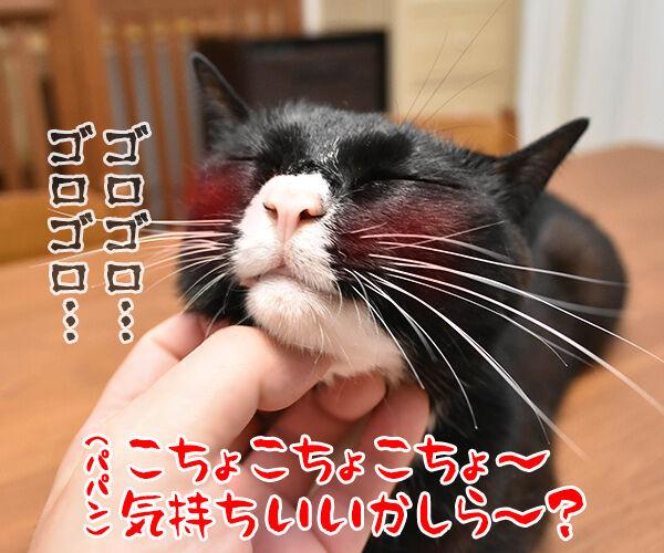 こちょこちょ ゴロゴロ 猫の写真で4コマ漫画 2コマ目ッ