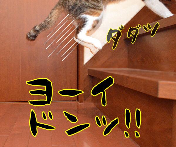 運動会で走る我が子 猫の写真で4コマ漫画 2コマ目ッ