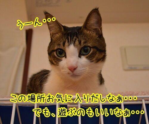 こっちにおいで 猫の写真で4コマ漫画 2コマ目ッ