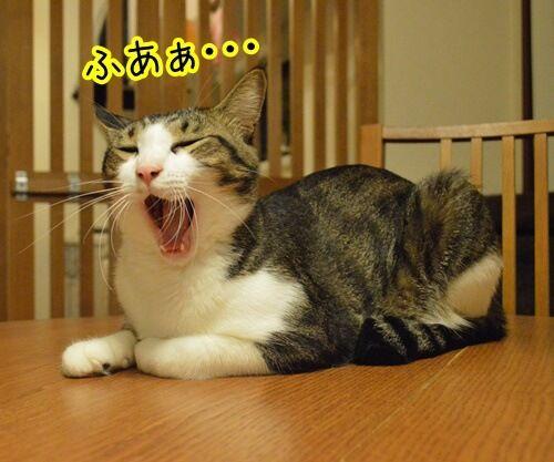 お願いがあるの 猫の写真で4コマ漫画 1コマ目ッ