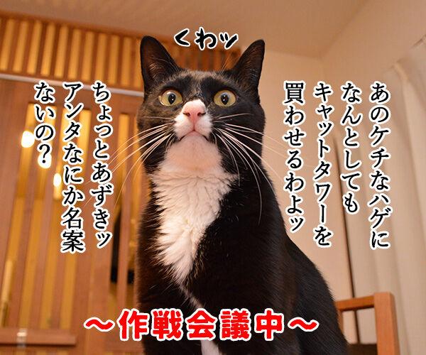 作戦会議 猫の写真で4コマ漫画 1コマ目ッ