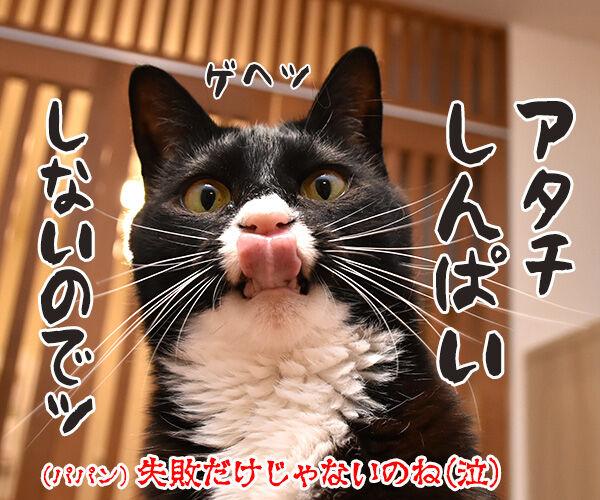 大ズ門未知子は一匹にゃんこのドクターなのッ 猫の写真で4コマ漫画 4コマ目ッ