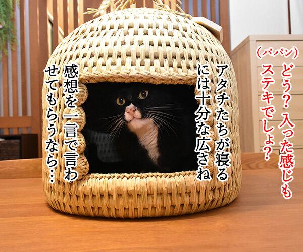 信州安曇野産の藁100%の『ねこつぐら』なのッ 猫の写真で4コマ漫画 3コマ目ッ