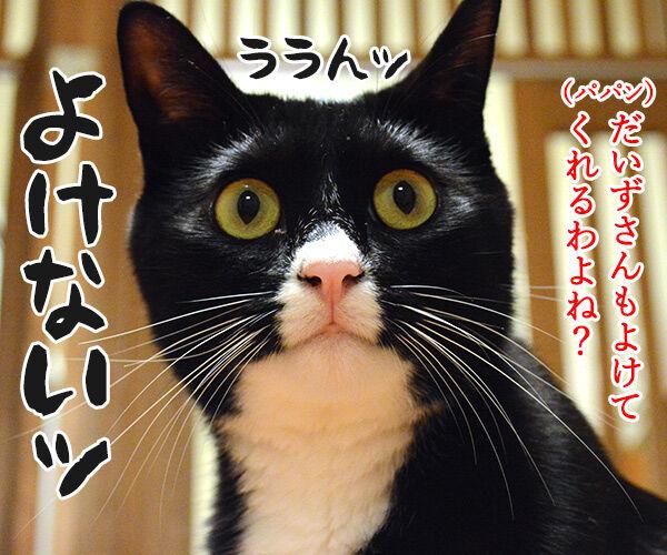 だいずさんだもの 猫の写真で4コマ漫画 4コマ目ッ