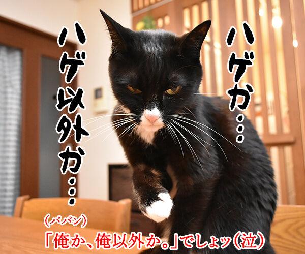 親からもらった大事な… 猫の写真で4コマ漫画 4コマ目ッ