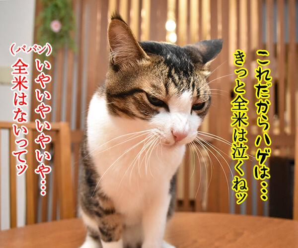 劇場版『名探偵コナン』は全米が泣くね… 猫の写真で4コマ漫画 2コマ目ッ