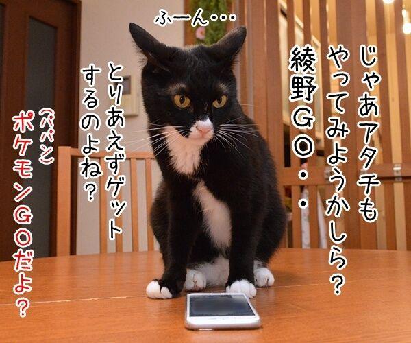 「ポケモンGO」でポケモンゲットだぜーッ 猫の写真で4コマ漫画 3コマ目ッ