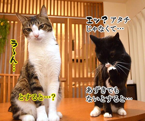 だれがやったのッ? 猫の写真で4コマ漫画 3コマ目ッ