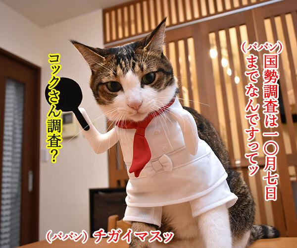 国勢調査は10月7日までなのよッ 猫の写真で4コマ漫画 1コマ目ッ