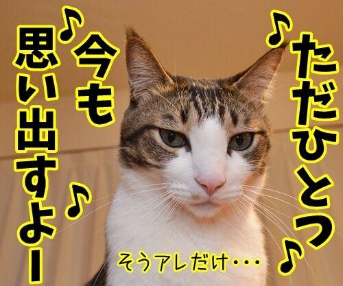 天体観測 其の二 猫の写真で4コマ漫画 3コマ目ッ