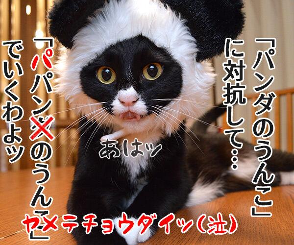 シャンシャンがうんこを販売したんですってッ 猫の写真で4コマ漫画 4コマ目ッ