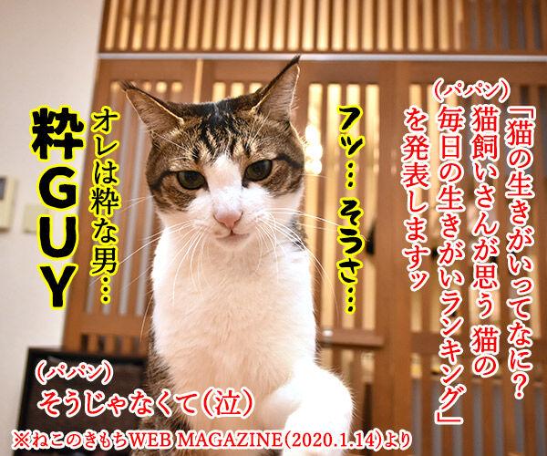 猫飼いさんが思う猫の毎日の生きがいランキングなのよッ 猫の写真で4コマ漫画 1コマ目ッ