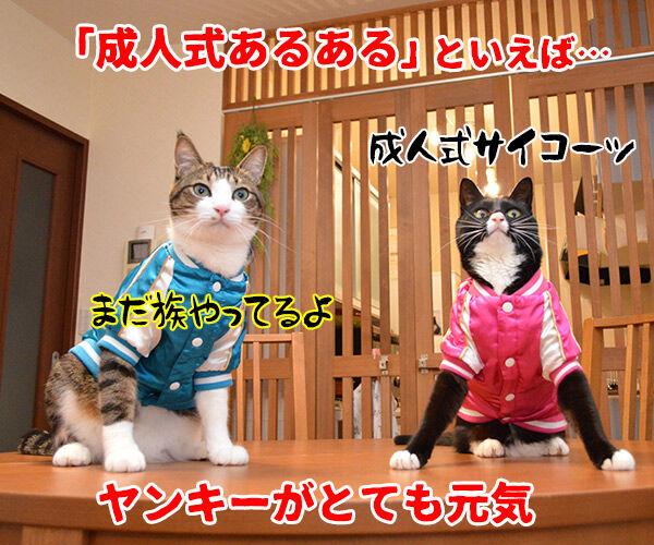 成人式あるある 猫の写真で4コマ漫画 1コマ目ッ