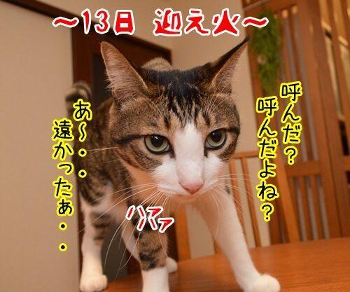 お盆 猫の写真で4コマ漫画 1コマ目ッ