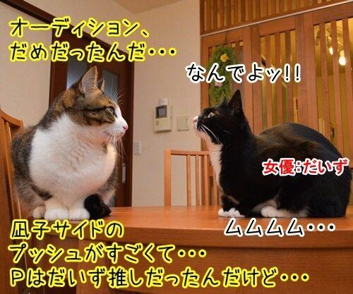 出来レース 猫の写真で4コマ漫画 2コマ目ッ