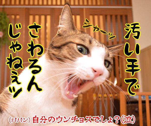 いつもウンチョス片付けてくれてアリガトー 猫の写真で4コマ漫画 4コマ目ッ