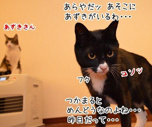 めんどうなのよッ 猫の写真で4コマ漫画 1コマ目ッ