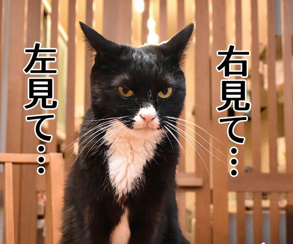 右見て・左見て・もう一度右見て 猫の写真で4コマ漫画 3コマ目ッ