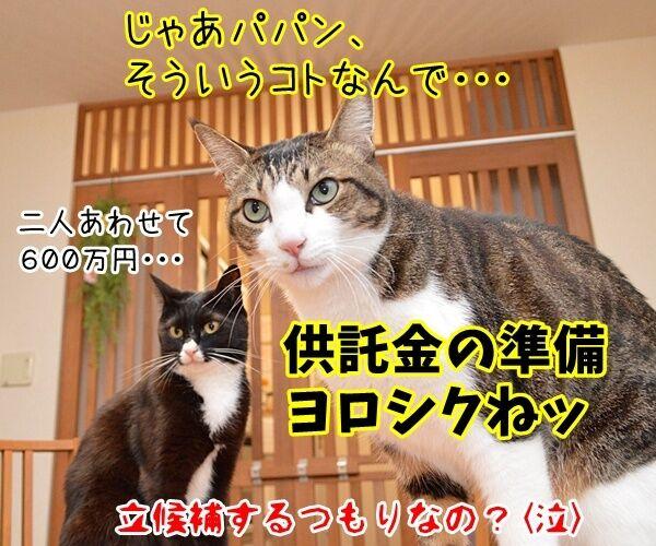 二人が決めたコト 猫の写真で4コマ漫画 4コマ目ッ