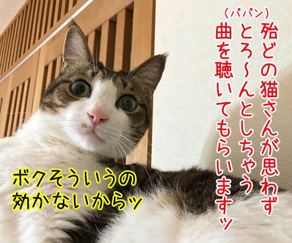『ねこのための音楽~Music for Cats~』を聴かせてみたのッ 猫の写真で4コマ漫画 1コマ目ッ