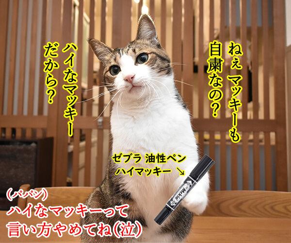 マッキーの曲が配信停止になるのはさみしいのよッ 猫の写真で4コマ漫画 2コマ目ッ