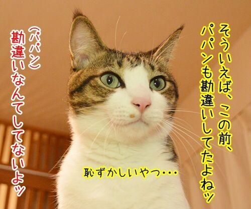 恥ずかしい勘違い 其の二 猫の写真で4コマ漫画 3コマ目ッ