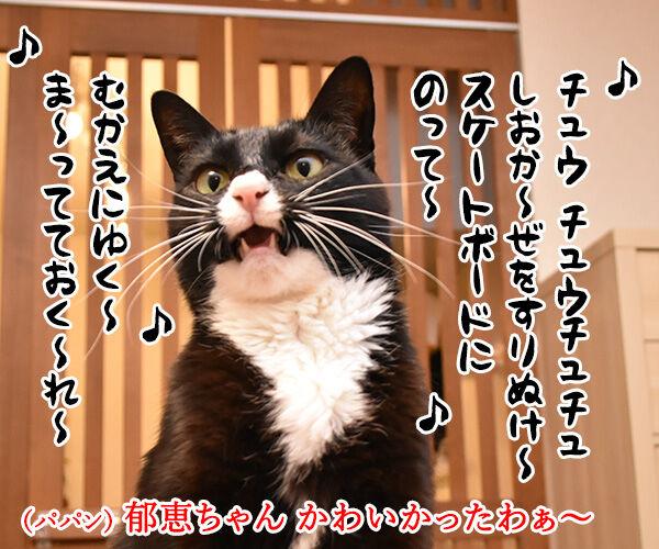 『夏のお嬢さん』はチュウ チュウチュチュなのッ 猫の写真で4コマ漫画 2コマ目ッ